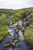 A small mountain stream in the meadow in Ireland Stock Images