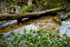 Small mountain stream Royalty Free Stock Image
