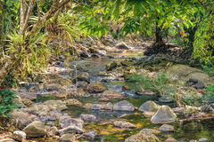 Small mountain stream in a shady jungle. Small mountain stream in the shade of the tropical forest with snag tree in the foreground, Khao Sok National Park Royalty Free Stock Photos