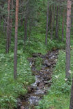 Small mountain stream in the woods with clear cold water Stock Image