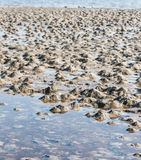 Small muddy heaps on the beach Royalty Free Stock Photography