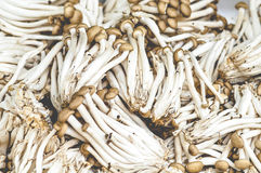Small Mushroom Background. Raw Small Mushroom For Soup Cooking Ingredient Royalty Free Stock Image