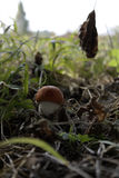 Small mushroom in the big world. S Royalty Free Stock Photography
