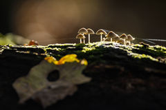 Small mushroom on death wood. Royalty Free Stock Photos