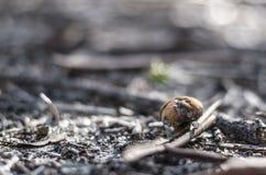 Small mushroom. In ground Stock Photos