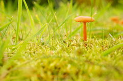 Small mushroom Stock Photo