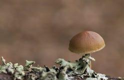 A small mushroom royalty free stock photo