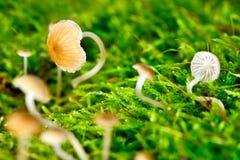 Small mushroom Stock Images