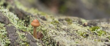 A small mushroom stock images