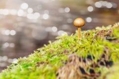 Small mushroom on a stone Stock Photography