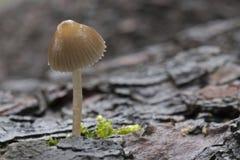 A small mushroom royalty free stock photos