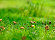 Small mushrooms Stock Images