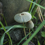 Small mushrooms Stock Image