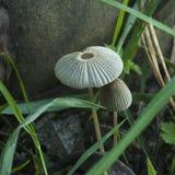 Small mushrooms Stock Image