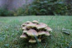 Small mushrooms family Royalty Free Stock Photography