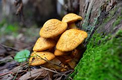 Small mushrooms in the forest. The importance of fungi for the forest. We all know that most mushrooms prefer forests to live Stock Photos