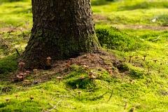Small mushrooms growing around tree trunk royalty free stock image