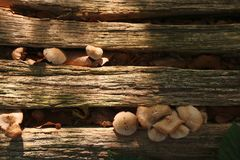Small mushrooms growing in cracks of tree trunk stock photo