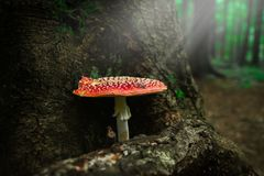 Small mushrooms growing next to trees and grass stock photo