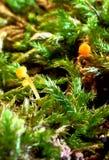Small mushrooms macro Stock Photo