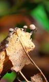 Small mushrooms macro Royalty Free Stock Image