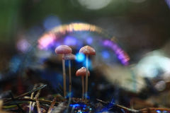 Small mushrooms mold. In forest Royalty Free Stock Image