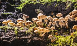 Small mushrooms in rain forest. Stock Image