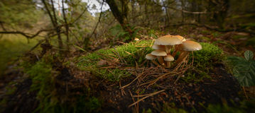 Small mushrooms Royalty Free Stock Photo