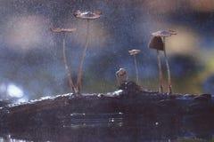 Small mushrooms toadstools macro Royalty Free Stock Photo