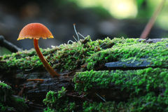 Small mushrooms on tree trunk Stock Photos