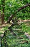 Small Narrow Creek. A small narrow creek in Texas Stock Image