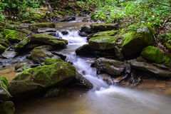 Small Native Trout Stream. Royalty Free Stock Image
