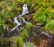 Small natural spring waterfall Stock Images
