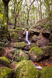 Small natural waterfall. Stock Image