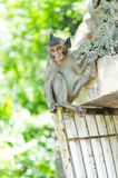 Small naughty monkey Stock Images