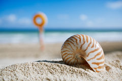 Small nautilus shell  on beach against blue sea Stock Images