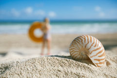 Small nautilus shell  on beach against blue sea Stock Photos