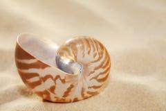 Small nautilus shell on beach sand Stock Photography
