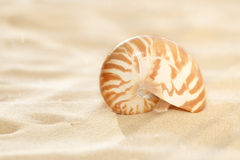 Small nautilus shell on beach sand Royalty Free Stock Photo