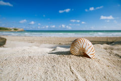 Nautilus shell  with ocean , beach and seascape Royalty Free Stock Image