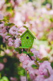 Small nesting box on the flowering branch Royalty Free Stock Image