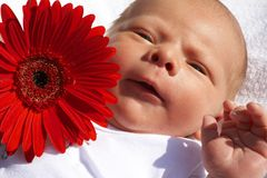 Small newborn baby with a flower Stock Images