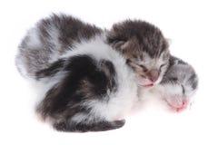 Small newborn kittens Royalty Free Stock Photo