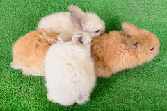Small newborn rabbits Stock Photo