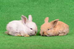 Small newborn rabbits Royalty Free Stock Images