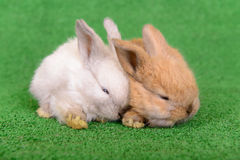 Small newborn rabbits Stock Photography