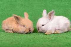Small newborn rabbits Royalty Free Stock Photo