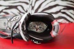 Small nice kittens Stock Photo