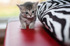 Small nice kittens Royalty Free Stock Photo