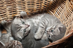 Small nice kittens Royalty Free Stock Photography